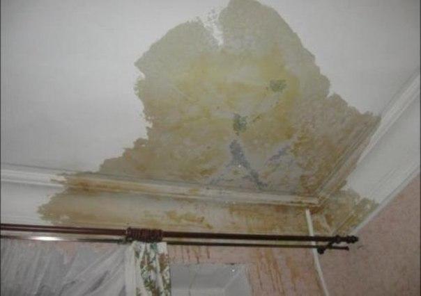 Затопили Плесень в ванной на потолке